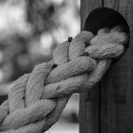 Seeds on the Rope by Ruth Tomlinson - Black & White Objects & Still Life ( pole, rope, black and white, still photography, seeds,  )