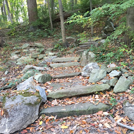 Rock on by Anna Marie Sarich - Nature Up Close Rock & Stone ( climb, stairs, wood, forest, rock )
