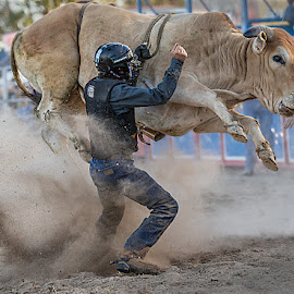 Unhand Me by Paul Milliken - Sports & Fitness Rodeo/Bull Riding ( rodeo, bullriding, australian rodeo )