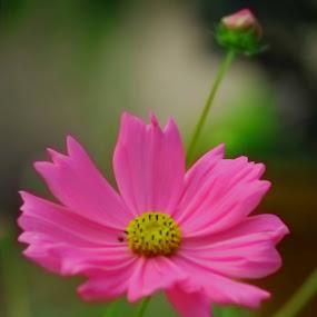 FLOWERS by Soumaya Karmakar - Flowers Flowers in the Wild (  )