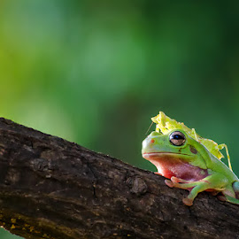 together by Dikky Oesin - Animals Amphibians