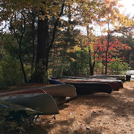 Row of Canoes by Kristine Nicholas - Novices Only Landscapes ( water, orange, green, boats, lake, leaf, leaves, boat, row, nature, autumn, sunset, fall, brown, pond, golden hour )