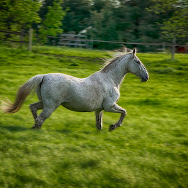 Prance by Dale Minter - Animals Horses ( mare, pasture, equine, green, horse, motion )