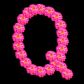 Q by Malay Maity - Typography Single Letters ( rose, single, letter, typography, flower, design )