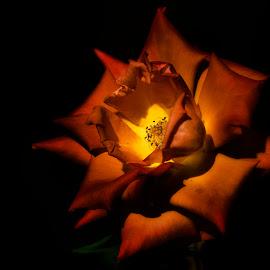 by Vladimir Jablanov - Flowers Single Flower