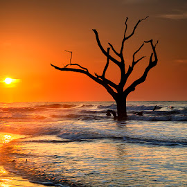 Timeless by Ken Smith - Landscapes Travel ( dead trees, sunrise, landscape, bulls island )
