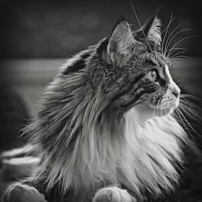 by Mark Luftig - Black & White Animals (  )