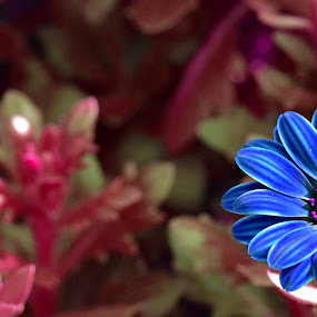 Feeling blue by Kelvin Đào - Nature Up Close Flowers - 2011-2013 ( colour, red, blue, leaves, garden, flower )