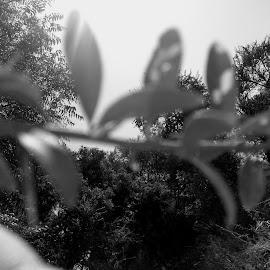 Bushes by Rahul Kumar Meena - Nature Up Close Trees & Bushes ( rkm )