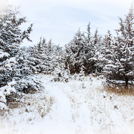 Winter Wonderland by Eric Wellman - Nature Up Close Trees & Bushes ( cold, snow, trees, cedar )
