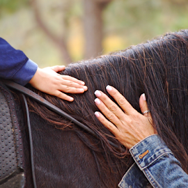 Hands On Horse Mane by Robin Amaral - Uncategorized All Uncategorized ( tranquil, reins, peaceful, saddle, hands, mane, companion, fingers, wholistic pet, wholistic, horse, close up, animal )