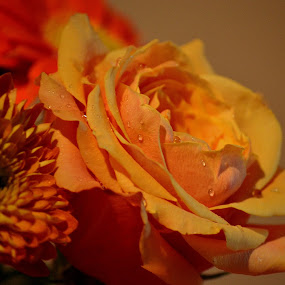 by Rima Biswas - Nature Up Close Flowers - 2011-2013
