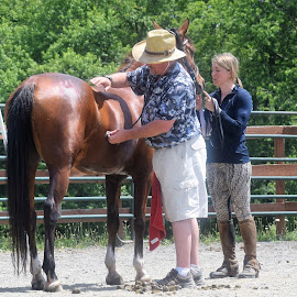 by Cindy Grago - Animals Horses