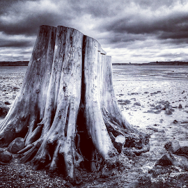 stumped by Todd Reynolds - Instagram & Mobile Android ( winter, stump, cold, beach, everett )