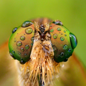Pocket Shot by Iwan Ramawan - Animals Insects & Spiders