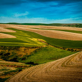 The Palouse by Mike Despot - Landscapes Prairies, Meadows & Fields