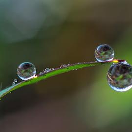 the dews... by Kawan Santoso - Nature Up Close Natural Waterdrops
