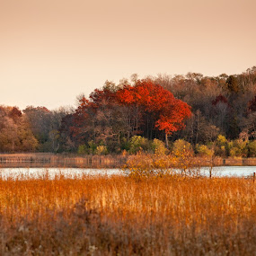 Over the Water by Relu Jianu - Landscapes Prairies, Meadows & Fields ( colors. moraine park, grass, fall, trees, lake, yellow, leaves )