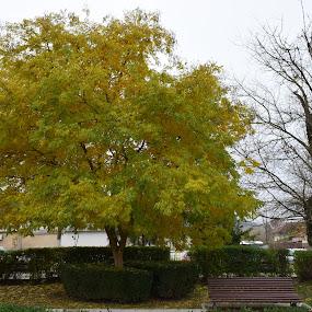 A walk in the park :) by Nicoleta Nastasa - City,  Street & Park  City Parks