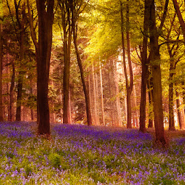 by Nic Evennett - Landscapes Forests