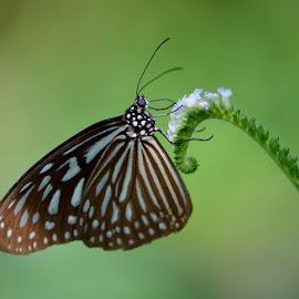 Bokeh by Terence Kok - Uncategorized All Uncategorized ( butterfly, macro, nature, beauty, bokeh )
