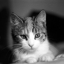 Cat by Florin Hritcu - Novices Only Pets ( film, cat, novice, black and white, close up, zenit,  )