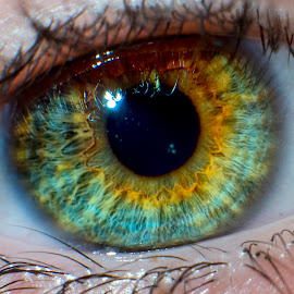 Lolly's Eye by Graham Peel - People Body Parts ( pupil, green, eye lashes, gaze, hazel, iris, brown, retina, eye )