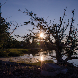 sun going down behind tree by Lisa Holden - Landscapes Sunsets & Sunrises