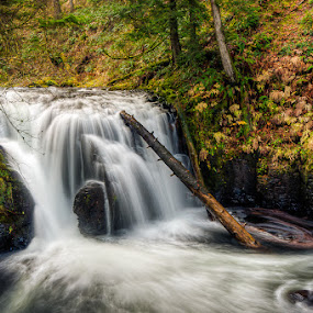 Waterfall by Walter Hsiao - Landscapes Waterscapes ( water, oregon, waterfall, fall, leaves, log )