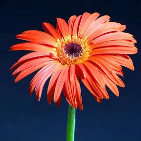 by Simanta Hazarika - Nature Up Close Flowers - 2011-2013