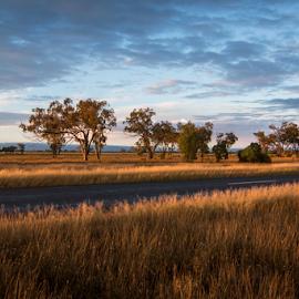 Roadside Vista by Michael Jones - Landscapes Prairies, Meadows & Fields