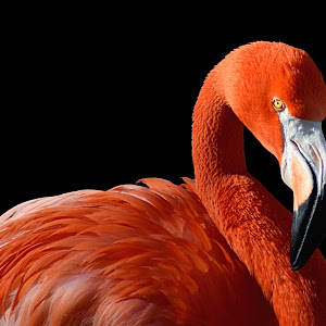 Flamingo Road2a.jpg