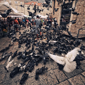 hunger by Vedrana Domazet - Animals Birds ( birds dubrovnik )