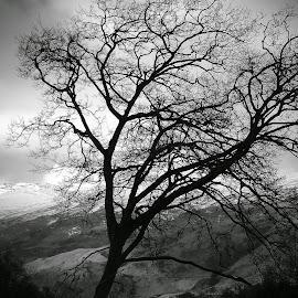 One Tree by Perla Tortosa - Instagram & Mobile Android ( winter, nature, tree, black and white )