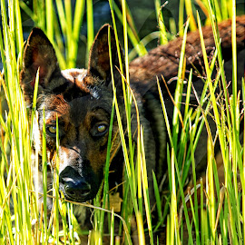 Sneaking Through the Pond Reeds by Twin Wranglers Baker - Animals - Dogs Portraits (  )