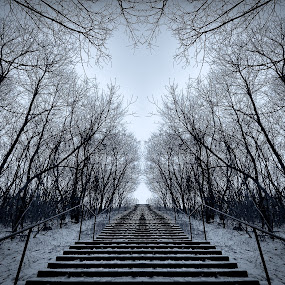 Stairway to heaven by Ralph Sobanski - Abstract Fine Art ( mirror, stairs, snow, trees, mono )