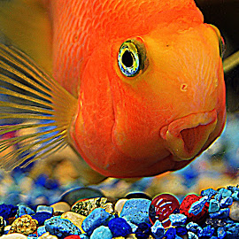 Golf Fish by Lorraine D.  Heaney - Animals Fish