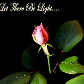 let there be light by Janna Morrison - Typography Quotes & Sentences
