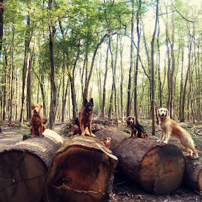by Ivana Tilosanec - Animals - Dogs Portraits ( models, animals, dogs, nature, pet, pets, dog, cute,  )