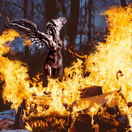 Firebird by Bjørn Bjerkhaug - Abstract Fire & Fireworks