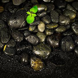 Black Beauty  by Kelston Williams - Nature Up Close Rock & Stone