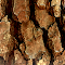 brown bark.jpg