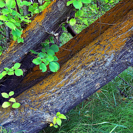 Tree trunk by Gaylord Mink - Nature Up Close Trees & Bushes ( lean, trunk, tree, leaves )
