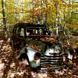 Forrest dump by Kjeld Olsen - Transportation Automobiles ( car, dump, forrest, wood, nature, autumn )