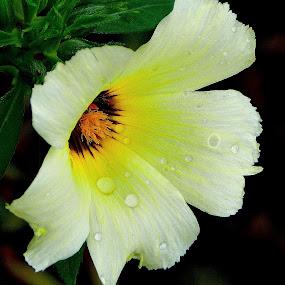 Just a wild flower! by Govindarajan Raghavan - Flowers Single Flower (  )