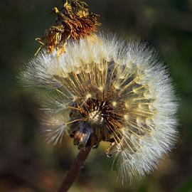 weed seeds by LADOCKi Elvira - Nature Up Close Gardens & Produce (  )