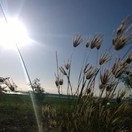 Sunrise by Renato Cayamdas - Instagram & Mobile Other ( morning sun, early morning sun, grass, sunrise, morning, sun rising, sun )