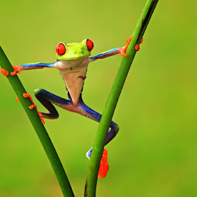 i am spiderman by Shikhei Goh II - Animals Amphibians