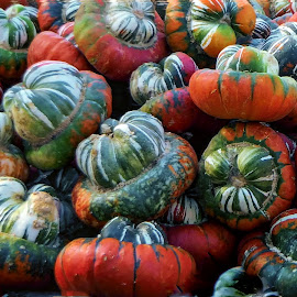 Turks Hat pumpkins by Dave Walters - Nature Up Close Other Natural Objects ( nature, macro photography, colors, lumix fz2500 )