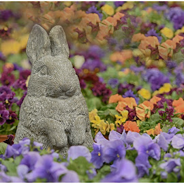 Easter Bunny  by Lorraine D.  Heaney - Public Holidays Easter